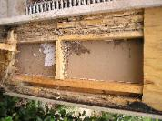 Structural, Water and Termite Damage to House Wall Framing